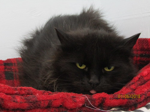 Shaggy - 9 year old spayed female | by carescatshelter