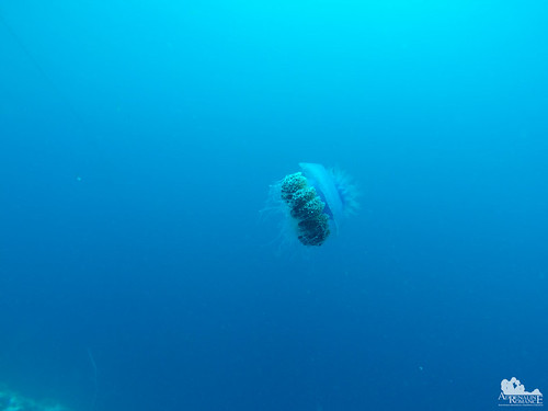 Big jellyfish! | by Adrenaline Romance