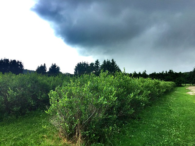 Le temps nuageux à la Bleuetière
