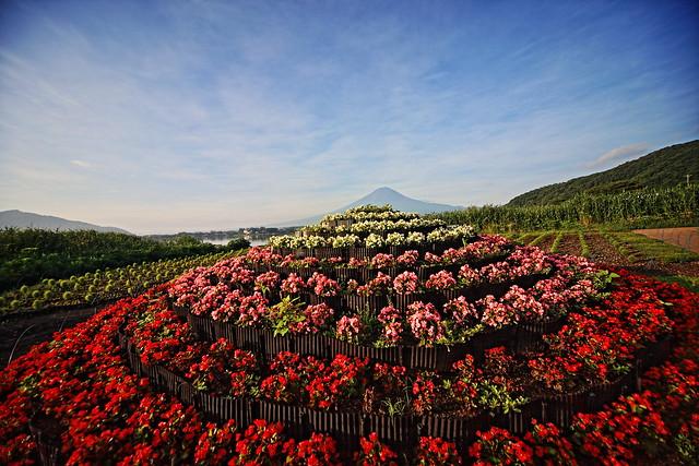 Lake Kawaguchi Herb Festival