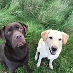 Cerrie & Sampson
