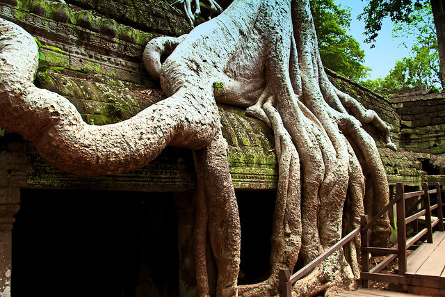 Roots and Ruins of Ta Prohm, Cambodia