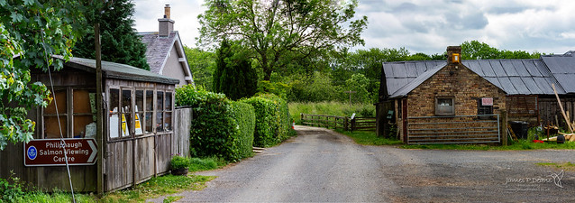 Philiphaugh near Selkirk 13 June 2018 00022-Edit.jpg