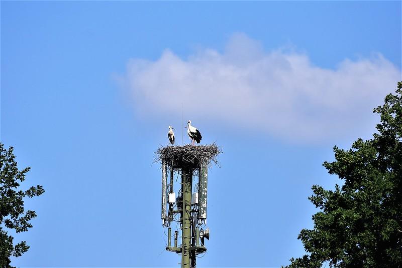 Stork 08.07.2018