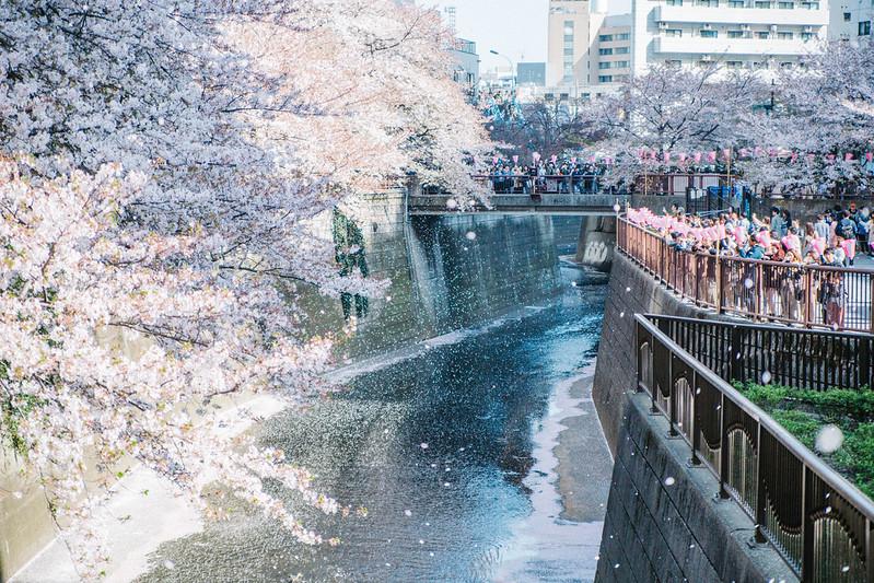 Hanami at Megurogawa River 2018