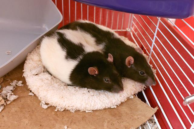 Daisy & Clowie - cozy time