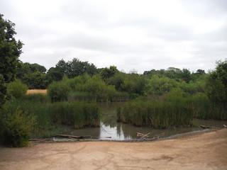 Warren Pond SWC Walk 259 - Epping Forest Centenary Walk: Manor Park to Epping