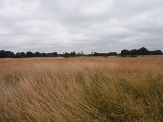 Wanstead Flats SWC Walk 259 - Epping Forest Centenary Walk: Manor Park to Epping