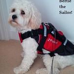 Bertie the sailor
