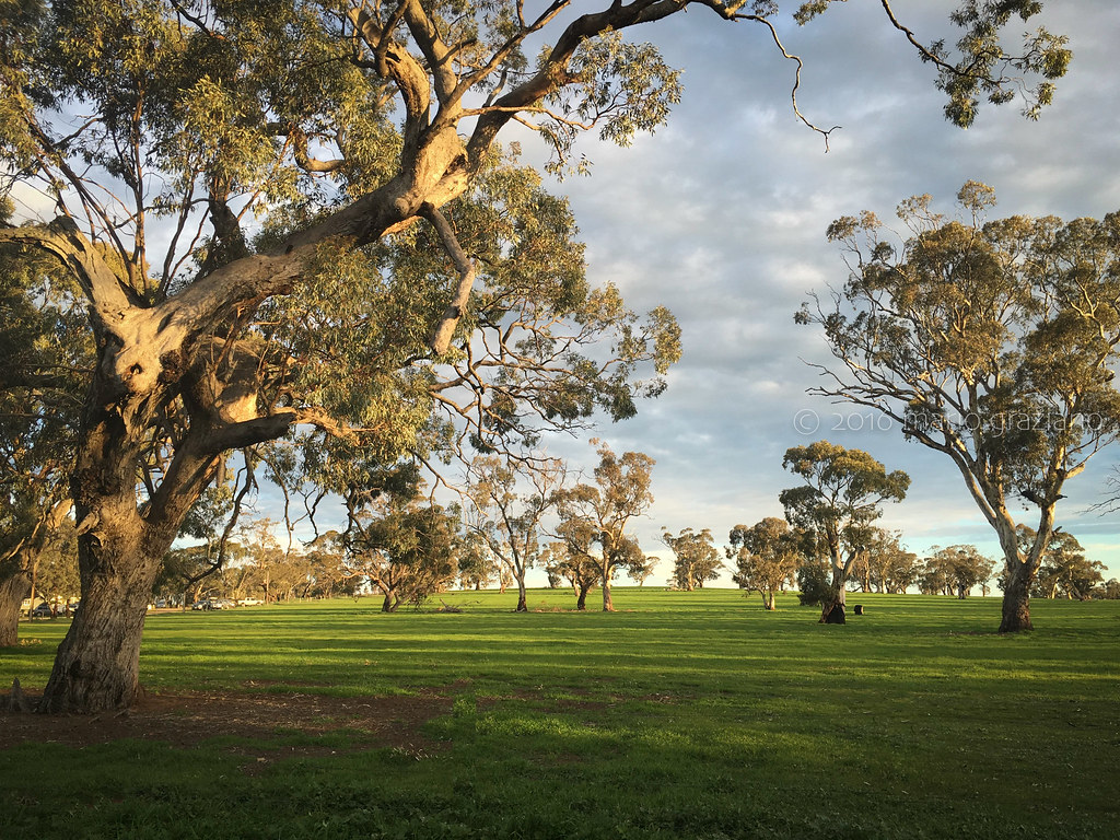 Australian Trees At The Border Between Victoria And South Flickr
