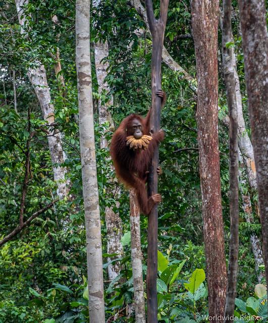 Borneo-14