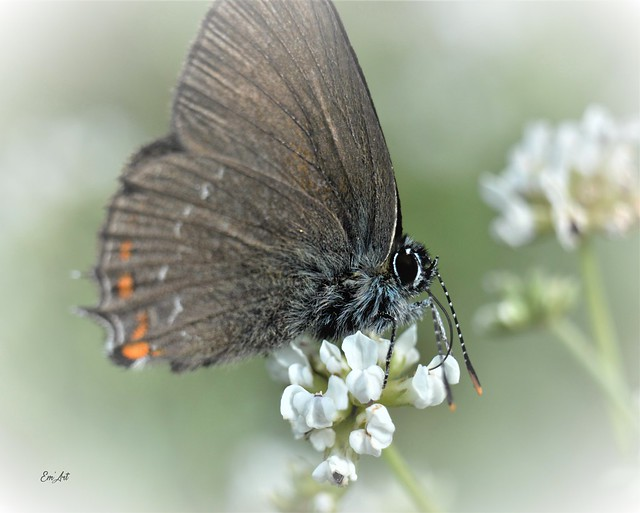 Testeur de nectar - Nectar tasting