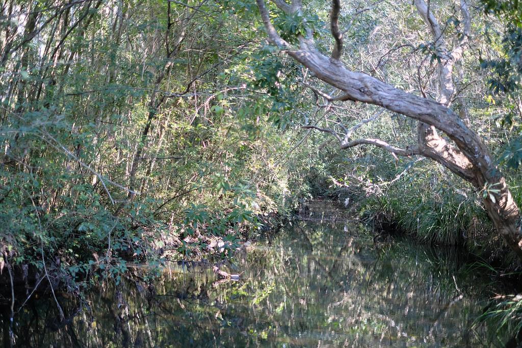 Terry's creek