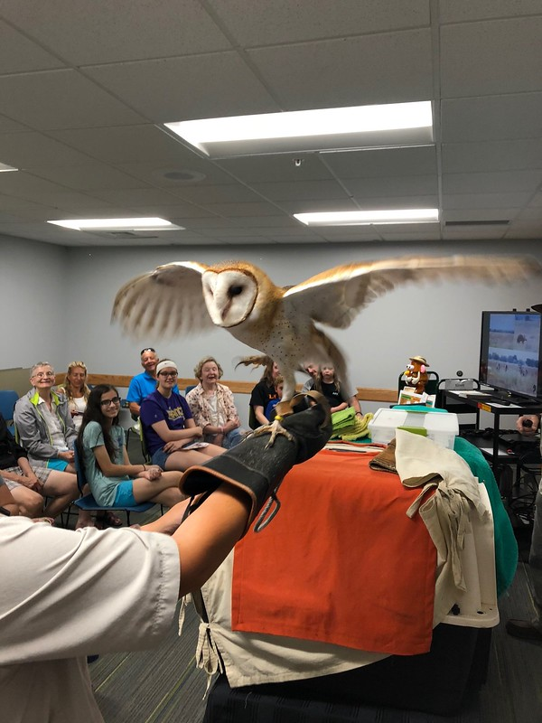 Meeting an owl and learning about conservation from Wild Hearts Mobile Teaching Zoo
