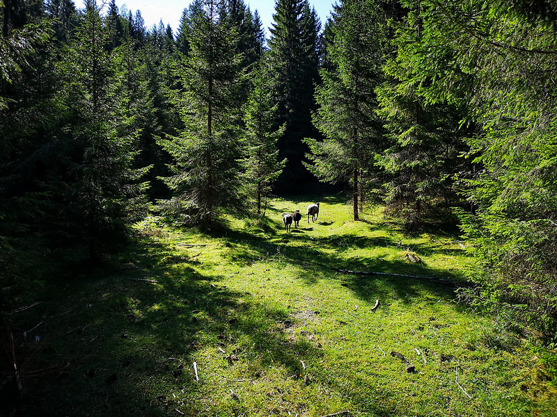 07-Sauer ved Overskylda
