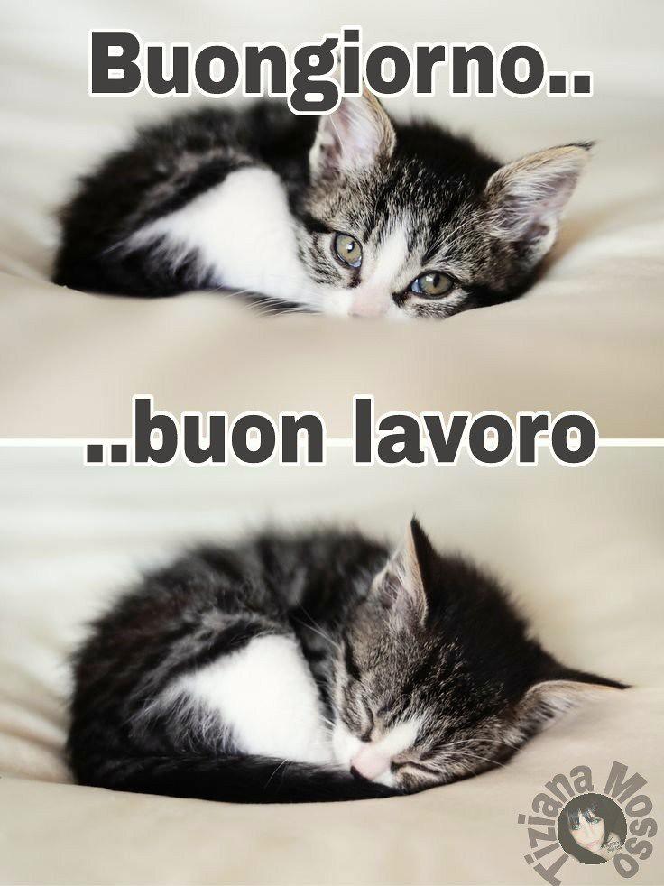 Foto Divertenti Buongiorno.Link Divertenti Buongiorno Buona Giornata Love Cat Flickr