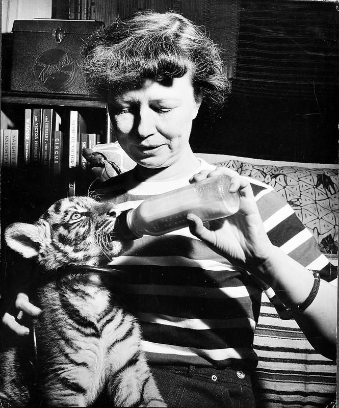 Lucile Quarry Mann Feeding Tiger Cub, Babette