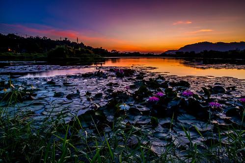 大嵙崁生態公園 荷花 晨曦 日出 d850 1424mm 天空 風景 自然 水塘 倒影 sunrise lotus