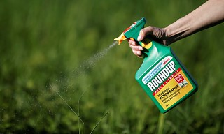Monsanto has been accused of hiding the dangers of its popular Roundup products for decades, a claim the company denies. Photograph- Benoit Tessier:Reuters | by coolloud