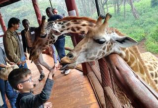 feeding-giraffes-kenya   by quirkytravelguy