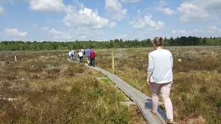 IRWC visit and public event at Scohaboy Bog, Cloughjordan, May 2018 | by Irish Ramsar Wetlands