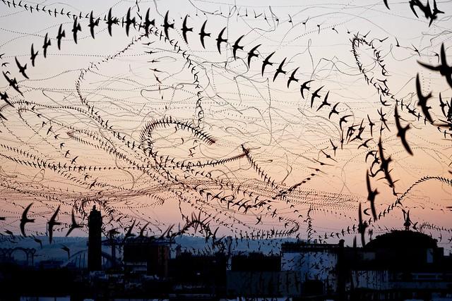 Bird trails