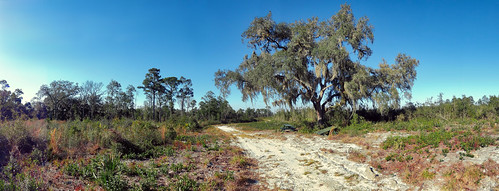 panorama panoramic florida sony hx9v nature scenic field oak outdoors