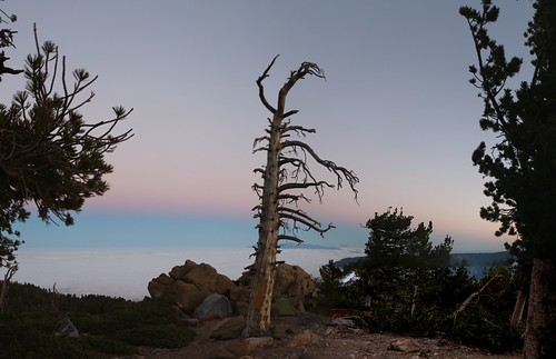 249 Looking west at dawn from Limber Pine Bench | by _JFR_