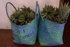Blue enrichment bags containing honey and seed laden tops of pineapples to be given out as enrichment