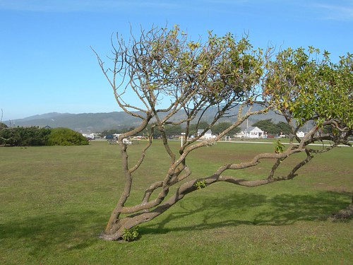 Wind-swept tree | by Natasha Lloyd