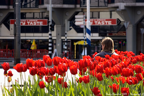 Red Tulip Man | by ND-Photo.nl