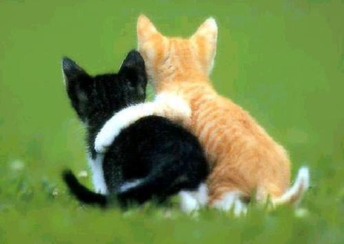 Cats 🐈 - YouTube