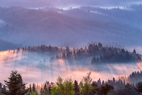 misty mistymorning greece sunrise treesinmist