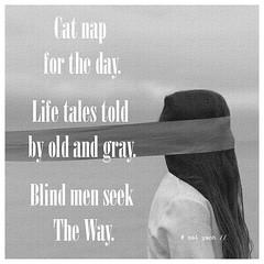 Cat Nap ...