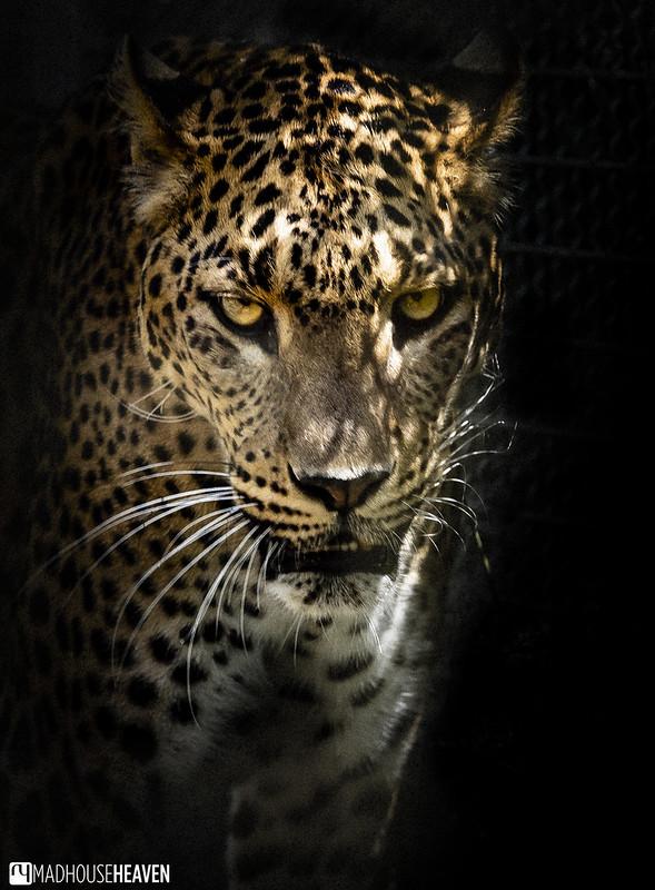 Barcelona Zoo - 0255