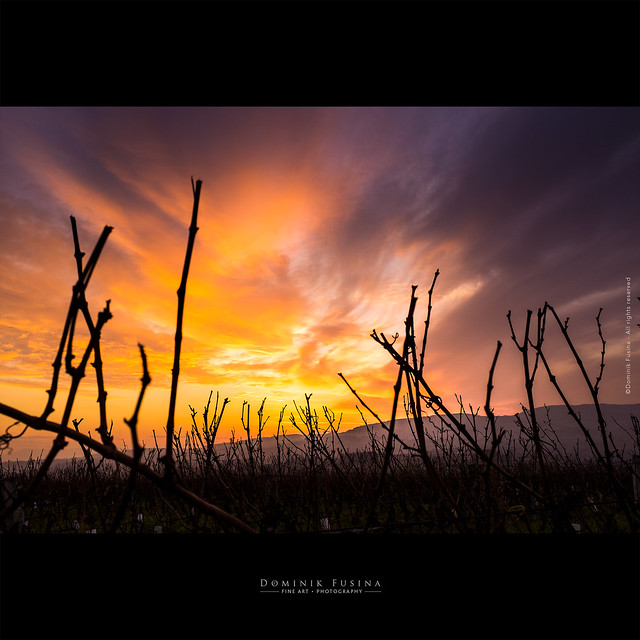 It was during winter | Beaujolais