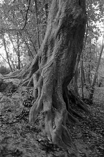 Mon arbre préféré | by fredmn