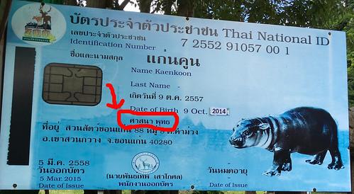 ขอนแก่น สวนสัตว์ animals aquatic esarn hippo hippopotamus isaan khonkaen thailand zoo