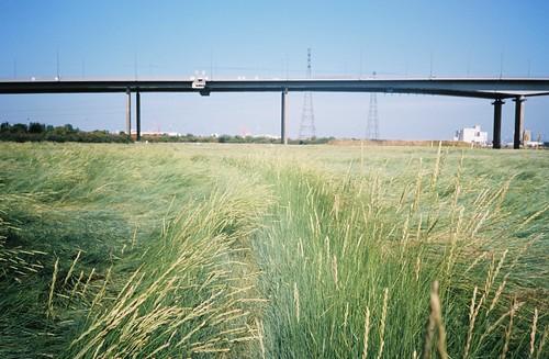 Path through the sea of grass   by knautia