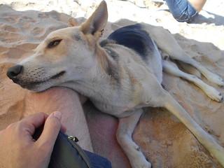 sandy doggo | by ravelite