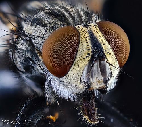 mosca  11.08 | by nestoryanes
