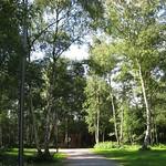 Birkenbestand im östlichen Teil des Gleisparks Frintrop
