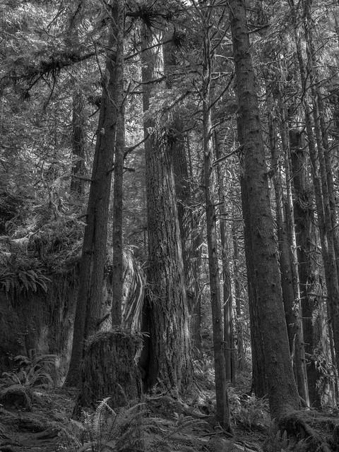 Big Cedar Tree Trail-1