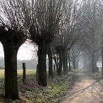 Kopfweidenallee in der Rheinaue Walsum im Winter
