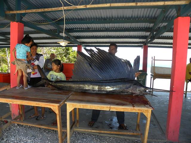 A Swordfish for sale - Продаётся рыба-меч