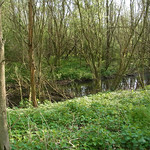 Wassergraben in der Heisinger Ruhraue