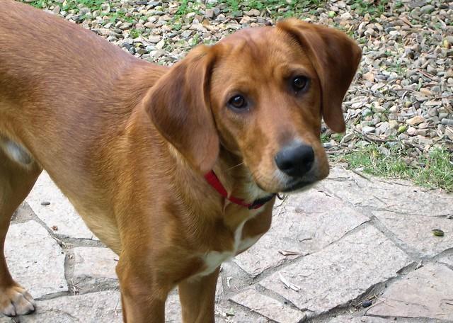 Il mio Skip, cane multirazza, a diversi stadi di età/My Skip, multiracial dog, at different age stages