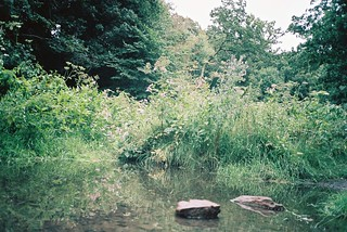 Brislington Brooks, stepping stones | by knautia