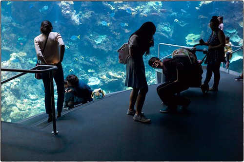 Teenagers, California Academy of Sciences, July 23, 2018 | by Maggie Osterberg