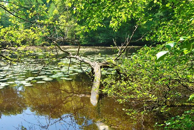 étang de Villecartier, 35, Bretagne